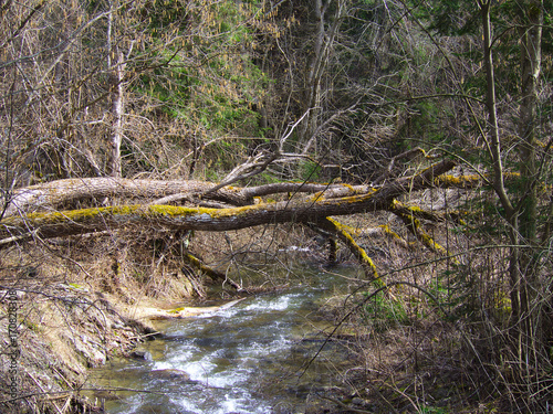 Poster Crocodile Fallen trees over a small creek in Slovakian mountain forest.