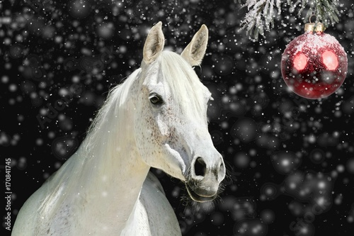 Fotografía  Weisses Pferd vor Weihnachtskugel