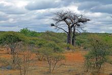 Bush Veld South Africa