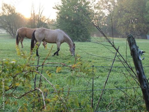 Photo  Horses at Sunrise