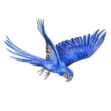 Hyacinth Macaw Isolated On Whi...