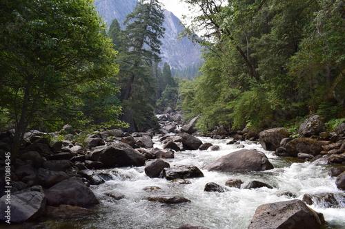 gorska-rzeka-pelna-kamieni-wsrod-wysokich-drzew
