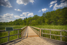 View Of Walkway In Marshland L...