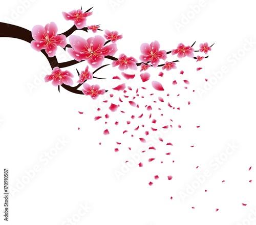 kwiaty-wisni-na-bialym-tle