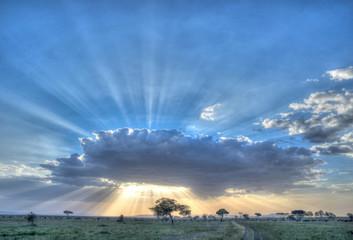 Africa, Tanzania Serengeti ...