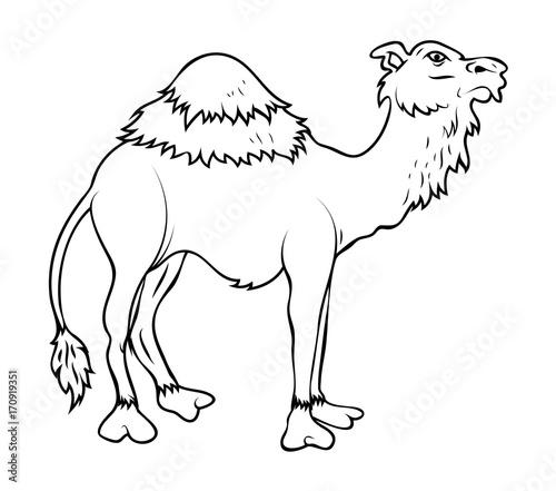 Cartoon handmade Camel Drawing - Buy this stock vector and