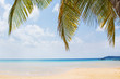 Palm leaf and tropical beach in Holiday