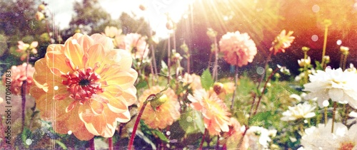 Poster de jardin Dahlia Grußkarte - Dahlien