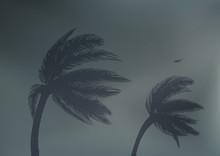Tornade - Cyclone - Tempête -...