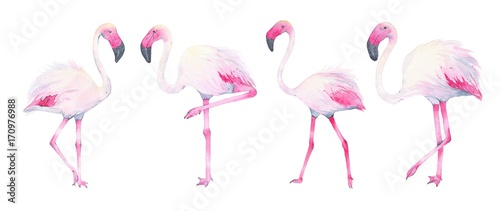 Canvas Prints Flamingo Bird Watercolor hand painted tropical pink flamingo isolated on white background