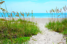 Sandy Sand Path Through Tropical Sea Oats Down To A Beautiful Calm Blue Ocean Beach On A Sunny Afternoon.