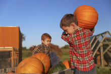 Boy Carrying Pumpkins. Childre...
