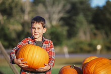 Happy Boy Picking A Pumpkin Fo...