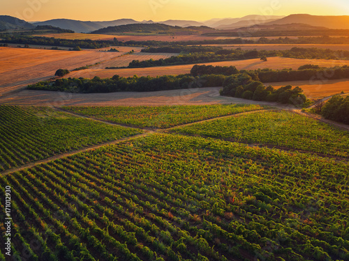 Poster Grijze traf. Beautiful Sunset over vineyard fields in Europe