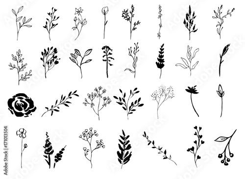 Fotografía  Set of Floral Elements