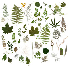 Herbarium - Collection Of Drie...