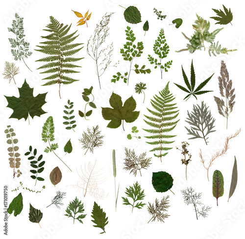 Herbarium - Collection of Dried Leaves   Wall mural