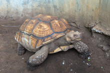 Turtles On The Ground In Zoo T...