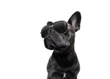 Posing Dog With Sunglasses