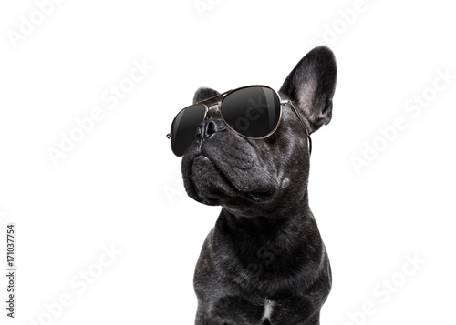Fotomural  posing dog with sunglasses