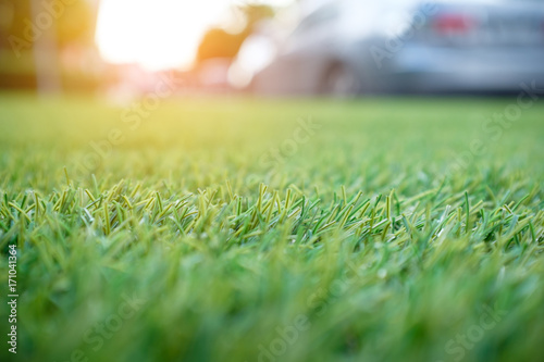 In de dag Olijf green grass background, artificial grass field for decoration at carpark with sunlight effect, shallow depth of field