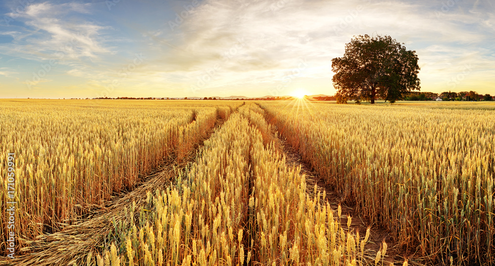 Tree and wheat field