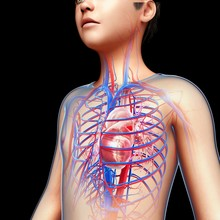 Illustration Of Boy's Heart Ag...