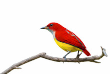 Colorful Bird Isolated On Bran...