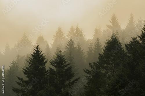 las-jodlowy-na-zboczach-gor-podczas-pochmurnej-pogody