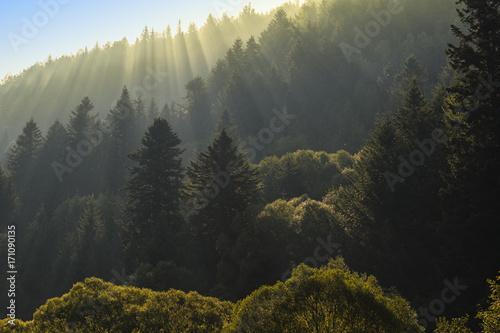 promienie-sloneczne-w-swierkowym-lesie-na-zboczu-gory