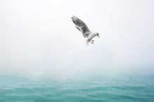 Beautiful Seagull In Venedig On A Rainy Day