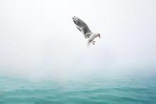 Beautiful Seagull In Venedig O...