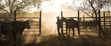 Mustering, Home Valley Station
