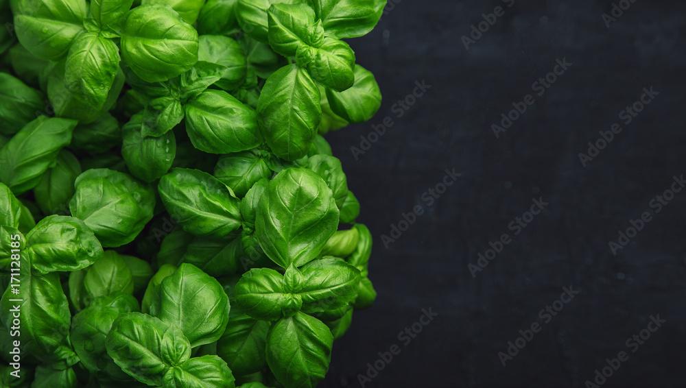 Fototapety, obrazy: Fresh basil on a dark background. Green basil. Food background. A lot of basil