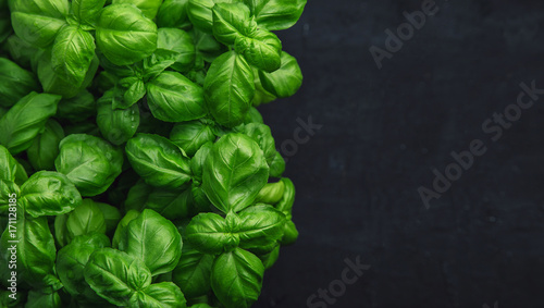 Obraz na plátně Fresh basil on a dark background