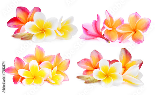 Poster Plumeria set of white and pink frangipani (plumeria) flower isolated on white background