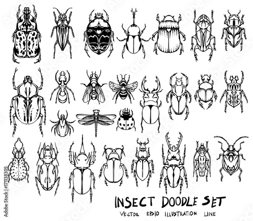 Photo  Set of insect doodle illustration Hand drawn Sketch line vector eps10