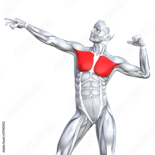 Fotografie, Tablou  Conceptual 3D illustration chest fit strong human anatomy or anatomical and gym