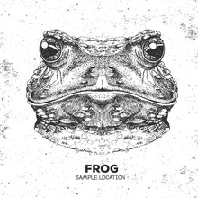 Hipster Animal Frog. Hand Draw...