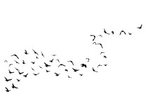 Flying Birds. Decoration Element From Scattered Silhouettes.
