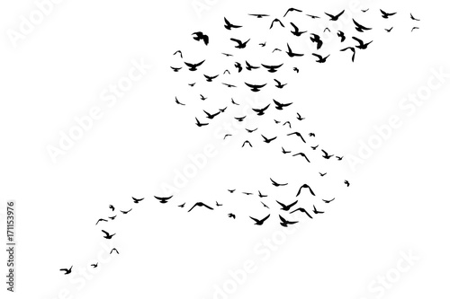 Flying birds. Decoration element from scattered silhouettes. Canvas Print