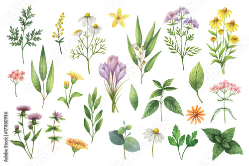 Fototapeta Hand drawn vector watercolor set of herbs and spices. obraz