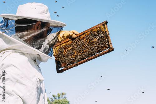 Plakat Praca pszczelarstwa zbiera miód.