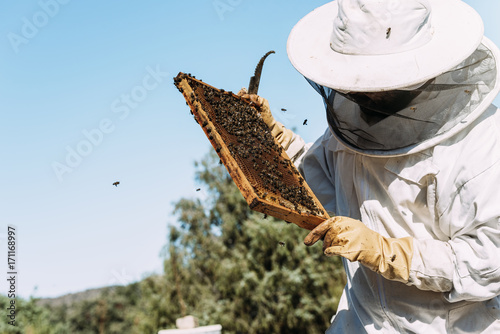 Photo Beekeeper working collect honey.