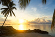 Silhouette of palm tree with sun, sea and beach
