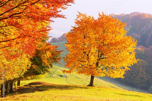 majestatyczne-bukowe-drzewo-z-pogodny-dzien