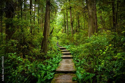 Obraz na płótnie Scenic Trail Through the Forest