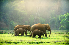 Elephant Family Walking Throug...