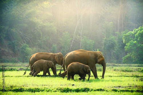 Foto op Aluminium Olifant Elephant family walking through the meadow.