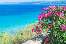Pink  Oleander Flowers (Nerium Oleander) By The Aegean Sea. Natural Landscape Summer Background. Greece, Kalithea.